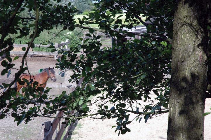 Der Blick vom Baumhaus auf die Koppel ... dahinter herrliche Wiesen und Wälder