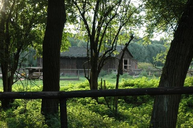 Der Stall für die Pferde, Zackelschafe und Hängebauchschweine