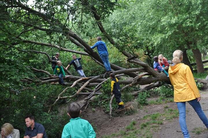 Über Bäume klettern